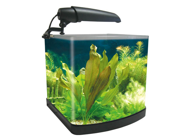 Mini desktop aquarium