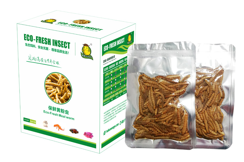 Eco Fresh Mealworms For Fish/Reptiles /Birds/Turtles/Hamsters/Lizards