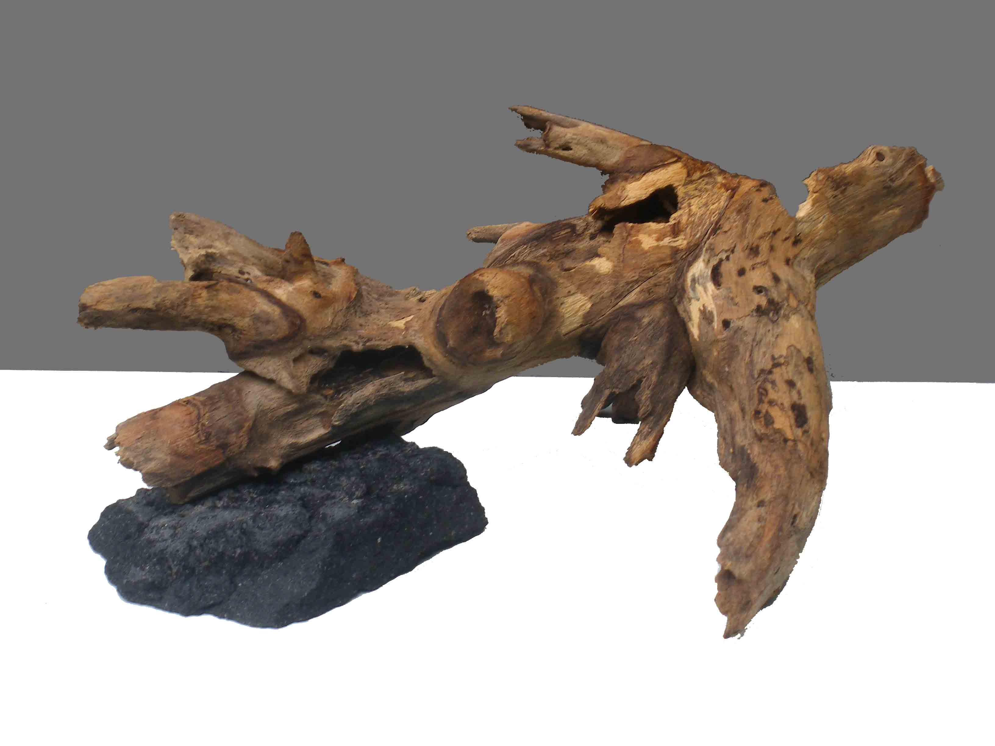 Driftwood on rock